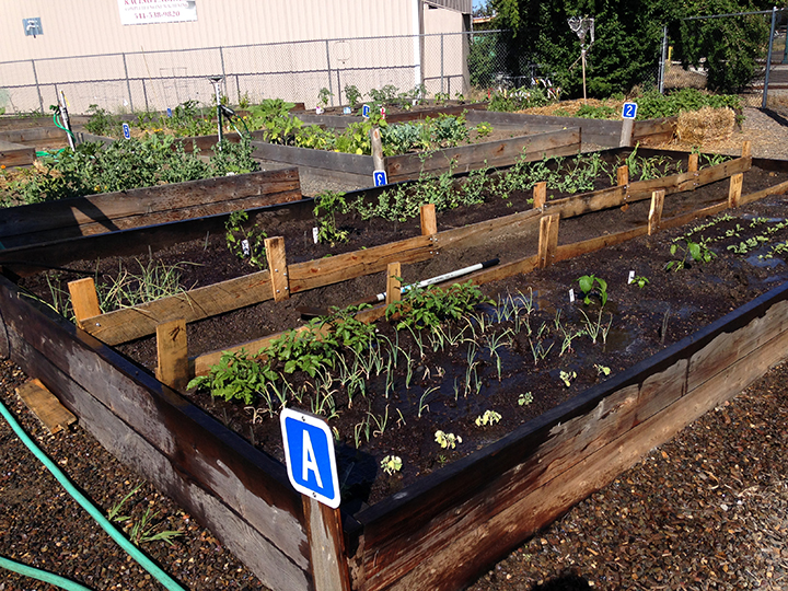 Our community garden plot a couple of years ago. This was our first garden together and we used the same approach!