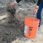 improving clay soil with mulch