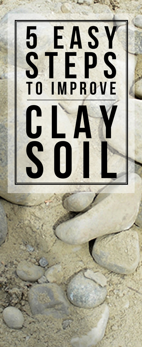 Golden tips for turning clay into beautiful, plantable soil that veggies will THRIVe in!!! #gardening #soil #homesteading