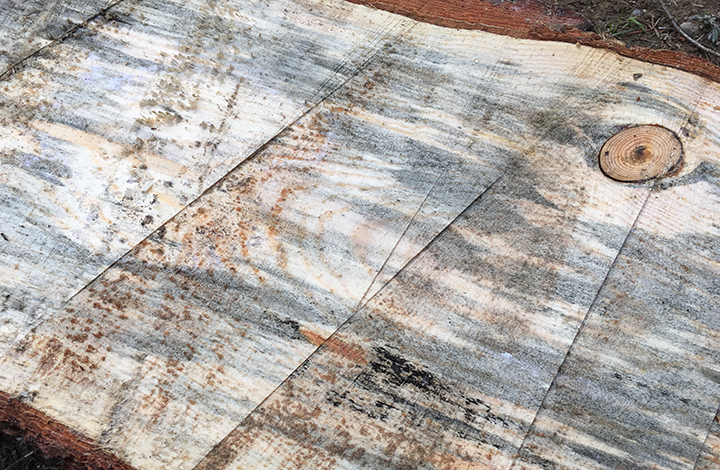 "Our beautiful 2"" thick blue pine slabs. Yes, those gouge marks are from our DIY chainsaw mill!"