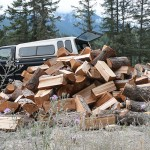 What to Expect When Gathering & Cutting Firewood