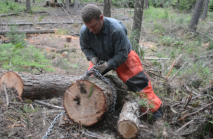 cutting firewood in national forests
