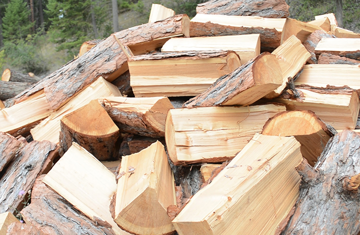 larch firewood cutting