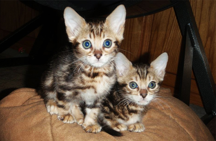 Gosh... look at those ears and their little button noses!